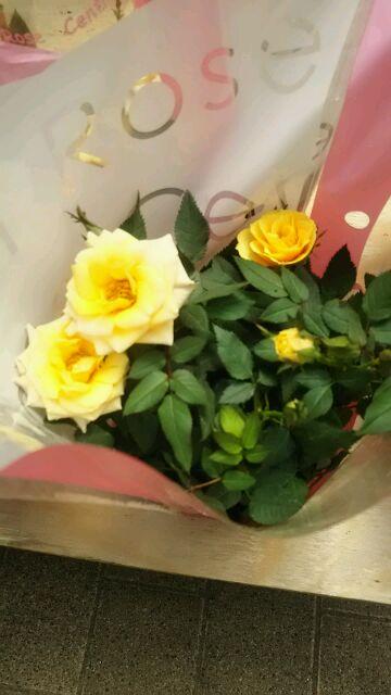 花花セール