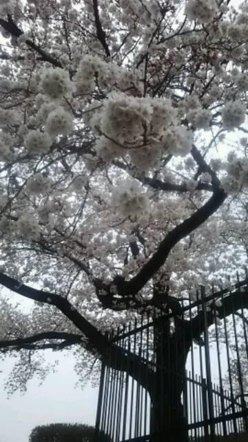 しきしマルシェ説明会Ⅱ